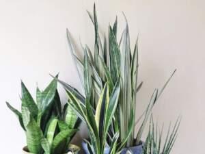 image بهترین گیاه برای نگهداری در شرایط آپارتمانی چیست