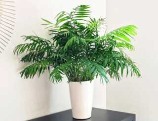 image بهترین گیاه برای نگهداری در اتاق خواب