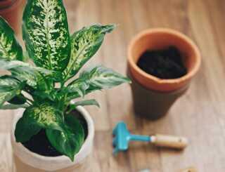 image آموزش کامل و حرفه ای قلمه زدن و تکثیر گیاه در خانه