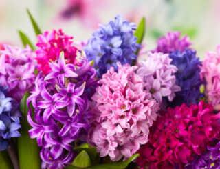 image عکس و مشخصات کامل گل های فصل بهار