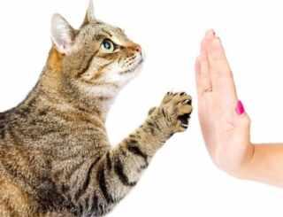 image بهترین راه برای آموزش گربه خانگی